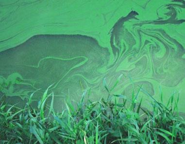 Wat doet een bacterie onder gunstige omstandigheden