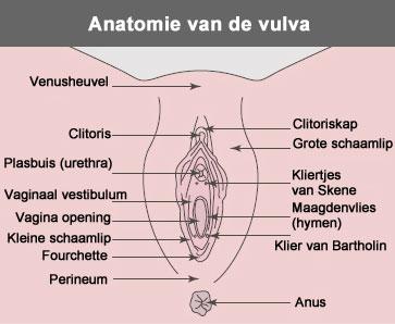 clitoris de Waar zit