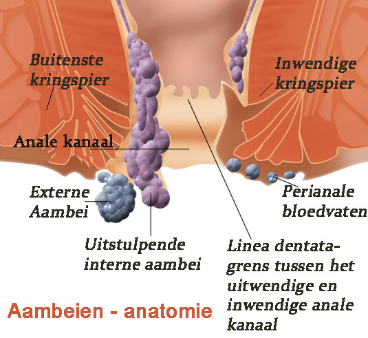 aambeien anatomie