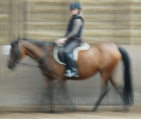 paardenallergie allergie voor paard